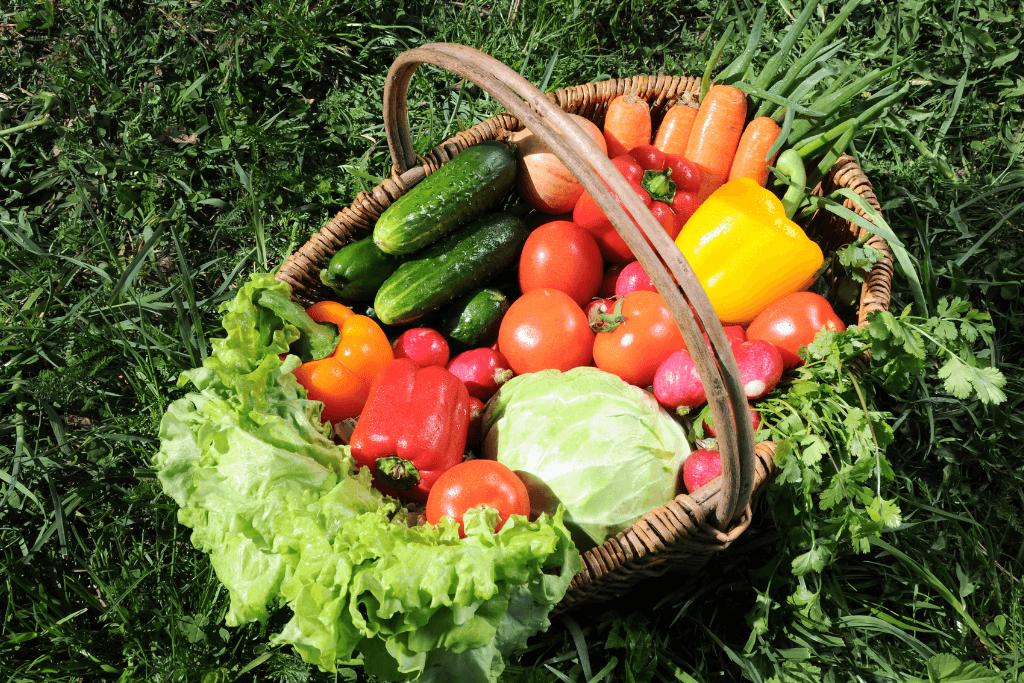 พืชผักออร์แกนิค superfood_MemagEat